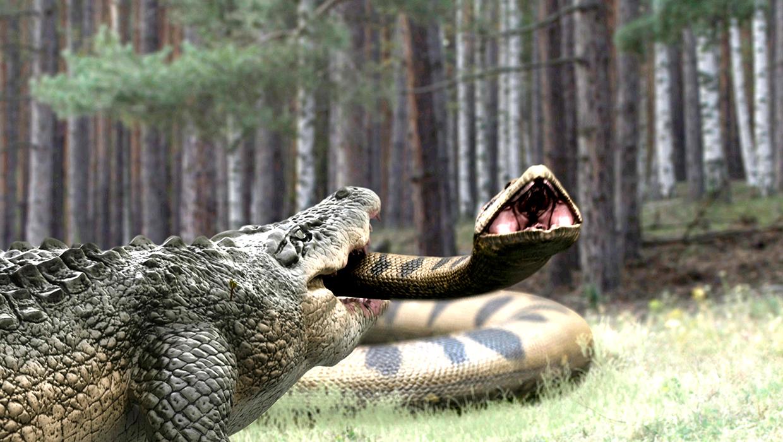 Anaconda Vs Lake Placid Full Movie lake placid vs. anaconda (2015)